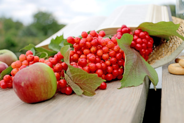 Red berries viburnum on a wooden table in a straw hat with a book of the Bible