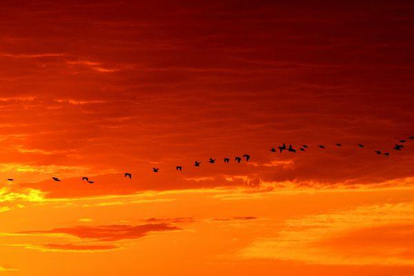 Taivaan linnut